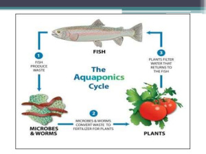 Aquaponics Cycle from Grow Your Own Nevada